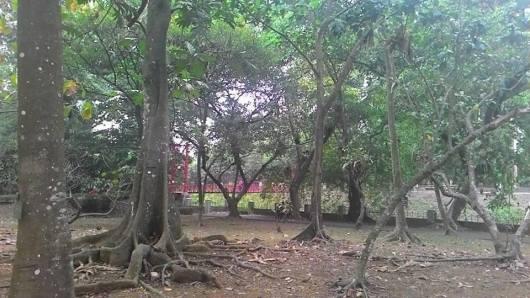 Kebun Raya.