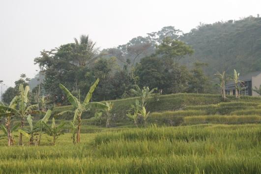 Around Bogor.