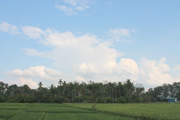 Sumatran countryside.