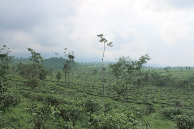 The Lembang Landscape.