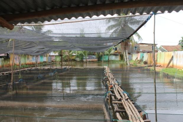 Om Ahmed's fish farm