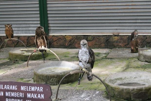these poor birds